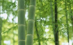 bamboo_de_japon-1920x1080