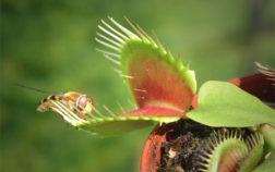 flordepredadora